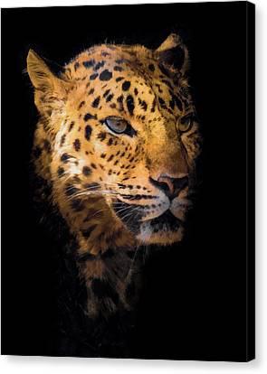 Amur Leopard Portrait 2 Canvas Print by Ernie Echols