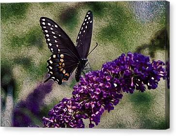 An Afternoon Visitor Canvas Print by Jeff Folger