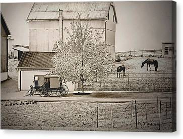 An Amish Farm In Sepia Canvas Print by Dyle   Warren