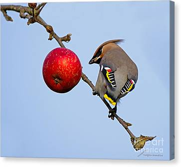 An Apple A Day... Canvas Print by Torbjorn Swenelius