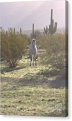 Canvas Print featuring the photograph An Arizona Morning by Ruth Jolly
