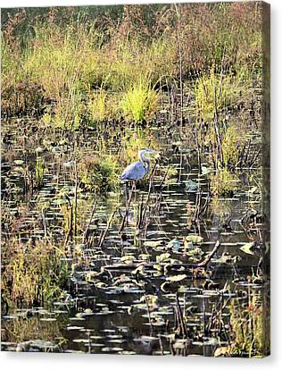 An Autumn Afternoon With The Great Heron Canvas Print by Maria Urso