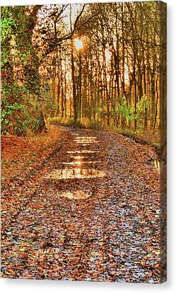 An Autumn Track Canvas Print by Dave Woodbridge