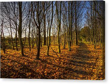 An Autumn Walk Canvas Print by Ross G Strachan