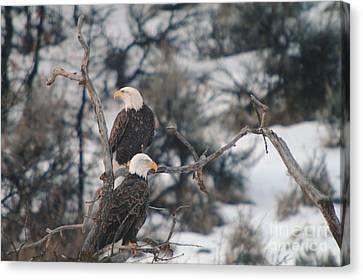 Oak Creek Canvas Print - An Eagle Pair  by Jeff Swan