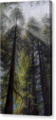 Sun Rays Canvas Print - An Enchanted Forest by Mary Giacomini