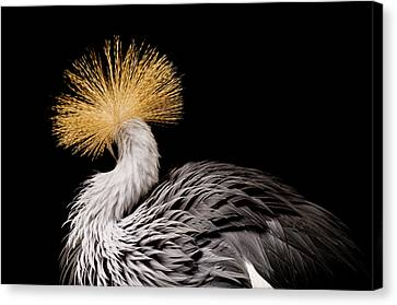 Rare Bird Canvas Print - An Endangered East African Crowned by Joel Sartore