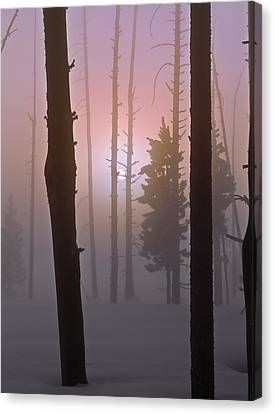 An Etheral Winter Forest Sunrise Canvas Print by Leland D Howard