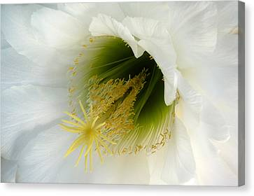 Canvas Print featuring the photograph An Inside View by Cindy McDaniel