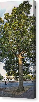 An Oak Tree In Colonial Williamsburg Canvas Print
