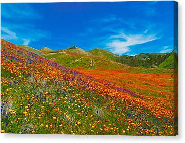 An Ocean Of Orange  Canvas Print