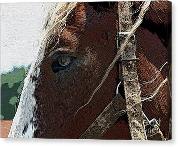An Old Friend Canvas Print