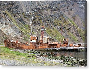 An Old Whaling Ship Canvas Print by Ashley Cooper