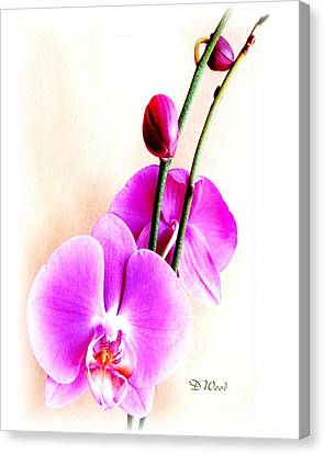 An Orchid For You Canvas Print by Doris Wood