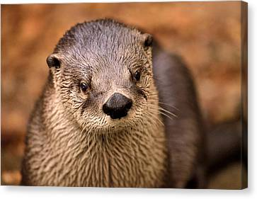 An Otter Portrait Canvas Print by Joshua McCullough