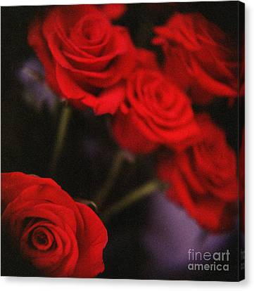Analog Photo Of Bunch Bouquet Of Red Roses Canvas Print by Edward Olive