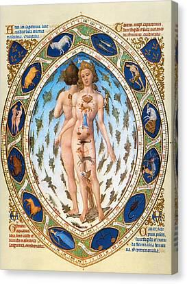 Anatomical Man Canvas Print by Granger