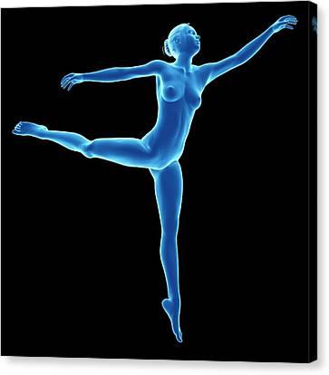 Ballet Dancers Canvas Print - Anatomy Of Female Dancer by Sebastian Kaulitzki