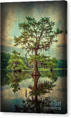 Ancestor's Cypress Canvas Print