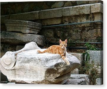 Ancient Agora Kitty Canvas Print