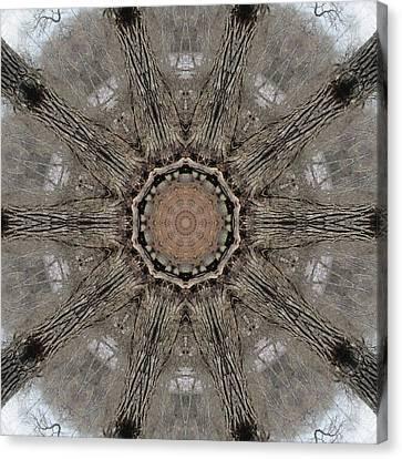 Ancient Cottonwood Canvas Print by Trina Stephenson