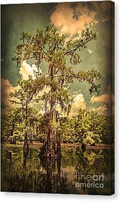 Ancient Cypress In Caddo Lake Canvas Print