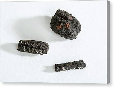 Ancient Egyptian Meteoric Iron Beads Canvas Print by Petrie Museum Of Egyptian Archaeology, Ucl