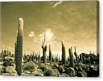 Canvas Print featuring the photograph Ancient Giants by Lana Enderle