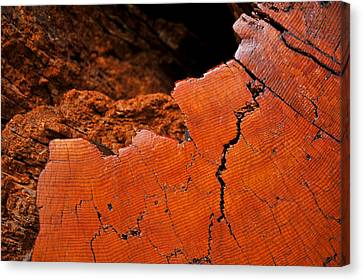 Ancient Log Canvas Print by Crystal Hoeveler