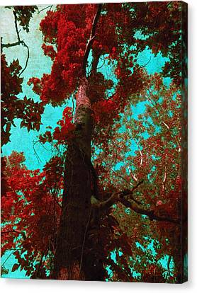 Ancient One Canvas Print by Shawna Rowe