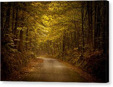 Country Road In Mississippi Canvas Print by T Lowry Wilson
