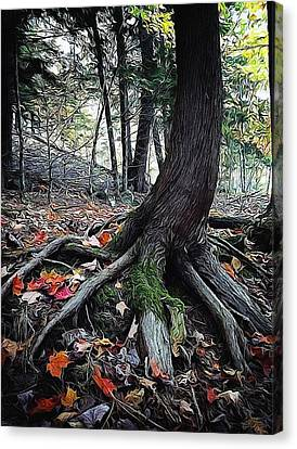 Ancient Root Canvas Print by Natasha Marco