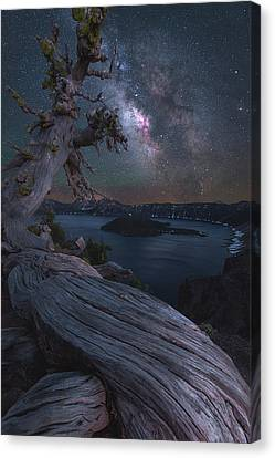 Craters Canvas Print - Ancient Roots Of Crater Lake by Steve Schwindt