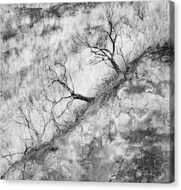 Ancient Sagebrush Canvas Print by Theresa Tahara