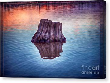 Ancient Tree Reflecting The Sunrise Canvas Print by Omaste Witkowski
