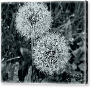 ...and I Huff... And I Puff... Canvas Print