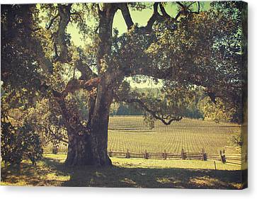 Oak Canvas Print - And I Smiled To Myself by Laurie Search