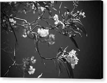 And Spring Became The Summer Canvas Print by Laurie Search