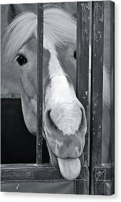 Canvas Print featuring the photograph And That's What I Think Of That by Barbara Dudley