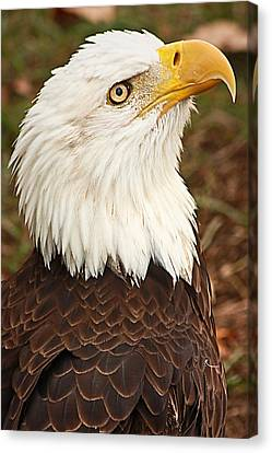 Canvas Print featuring the photograph And The Home Of The Brave... by Tammy Schneider