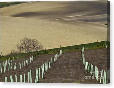 Andalusian Farmland Series-4 Canvas Print by Heiko Koehrer-Wagner