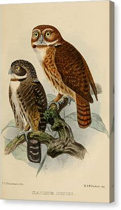 Andean Pygmy Owl Canvas Print by Dreyer Wildlife Print Collections