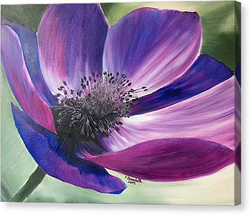 Anemone Coronaria Canvas Print by Claudia Goodell