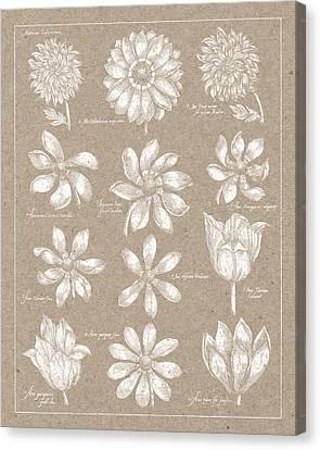Anemone Plate II Canvas Print by Wild Apple Portfolio