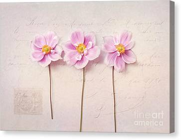 Anemone Trio Canvas Print by Sylvia Cook