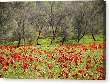 At Ruchama Forest Israel Canvas Print