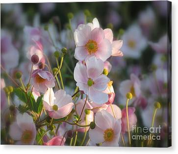 Anemones Soft Beauty Canvas Print by France Laliberte