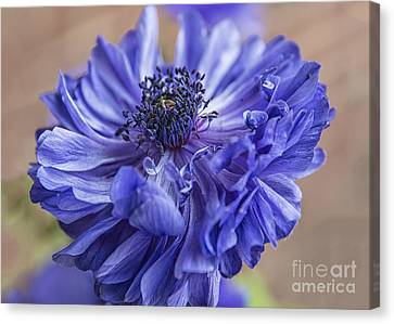 Anenome Canvas Print - Anemone Blues I by Terry Rowe