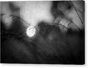 Impressionism Canvas Print - Anesthesia by Taylan Apukovska