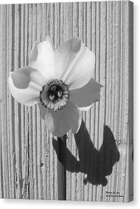 Angel Eyes Narcissus Canvas Print by Barbara St Jean